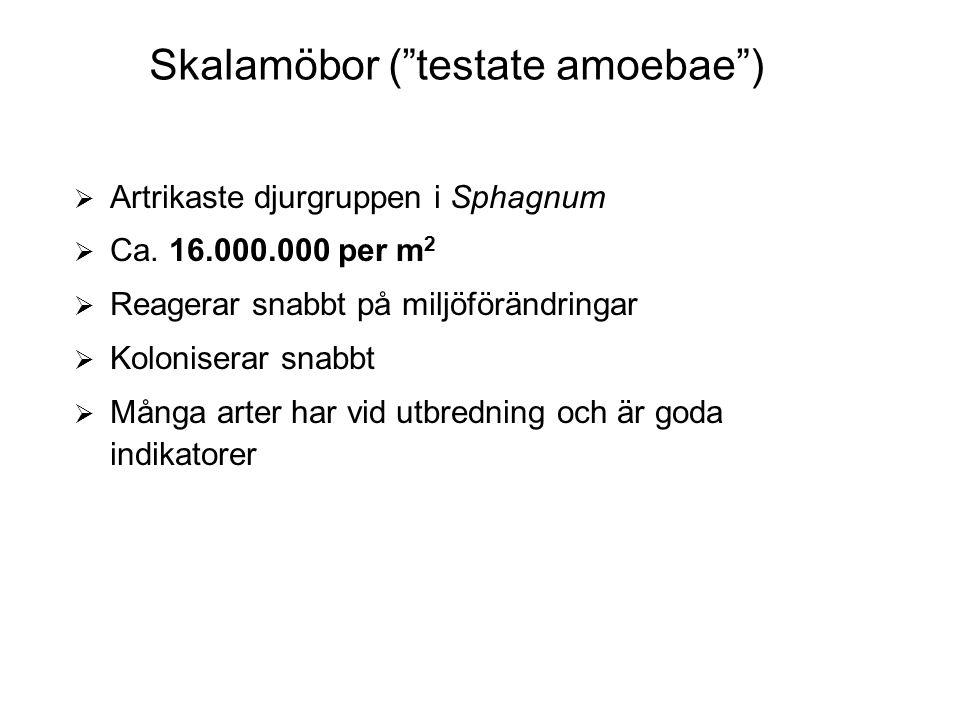 Skalamöbor ( testate amoebae )  Artrikaste djurgruppen i Sphagnum  Ca.