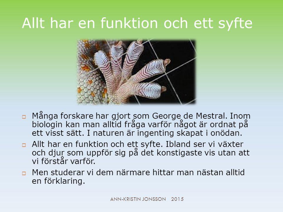 Allt har en funktion och ett syfte  Många forskare har gjort som George de Mestral.