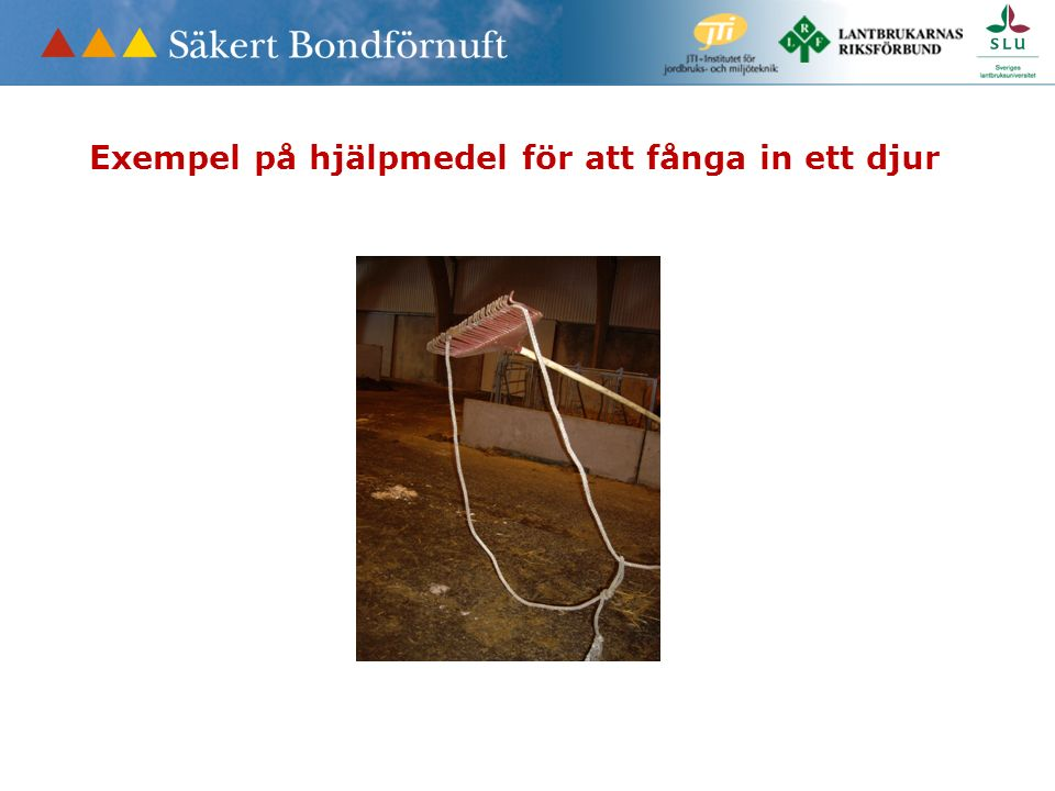 Exempel på hjälpmedel för att fånga in ett djur