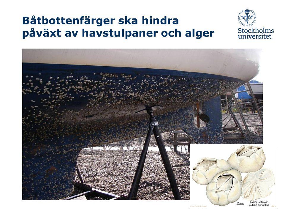 Båtbottenfärger ska hindra påväxt av havstulpaner och alger