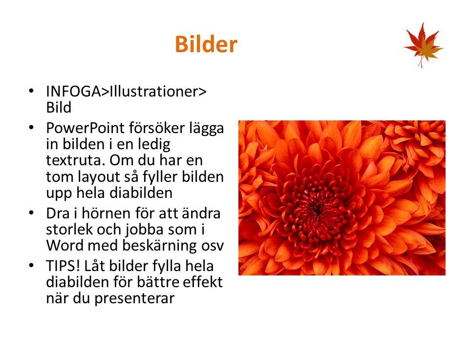 Bilder INFOGA>Illustrationer> Bild PowerPoint försöker lägga in bilden i en ledig textruta.