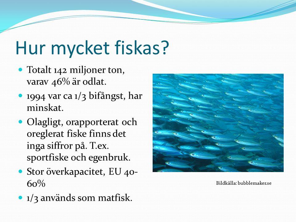Hur mycket fiskas. Totalt 142 miljoner ton, varav 46% är odlat.