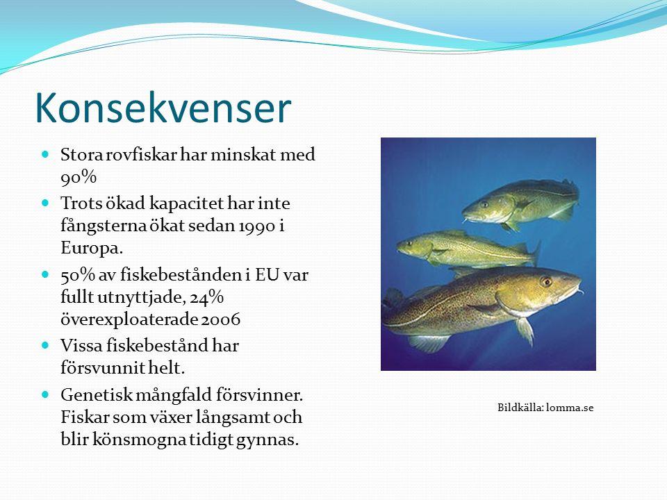 Konsekvenser Stora rovfiskar har minskat med 90% Trots ökad kapacitet har inte fångsterna ökat sedan 1990 i Europa.