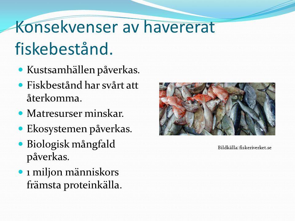 Konsekvenser av havererat fiskebestånd. Kustsamhällen påverkas.