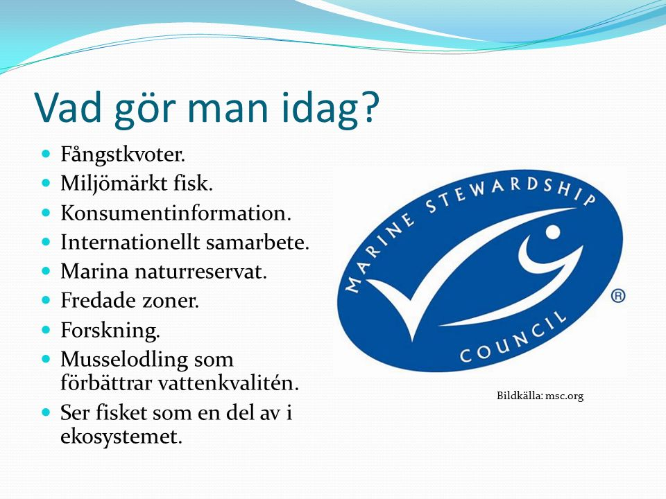 Vad gör man idag. Fångstkvoter. Miljömärkt fisk.