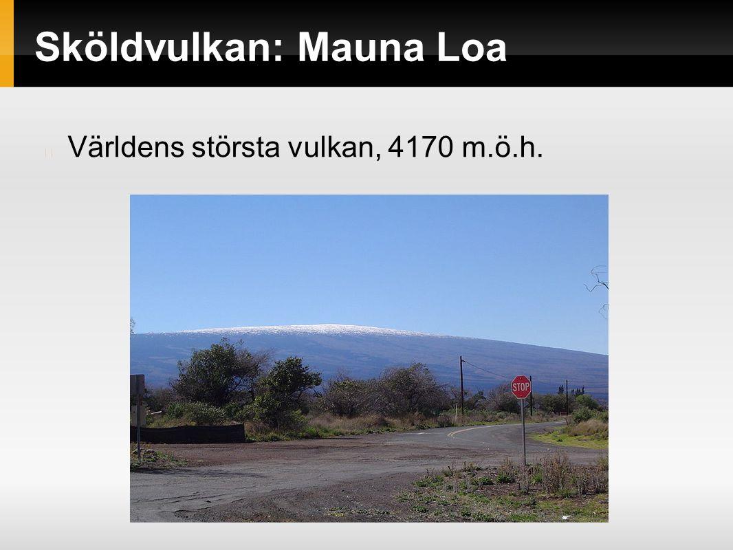 Sköldvulkan: Mauna Loa Världens största vulkan, 4170 m.ö.h.