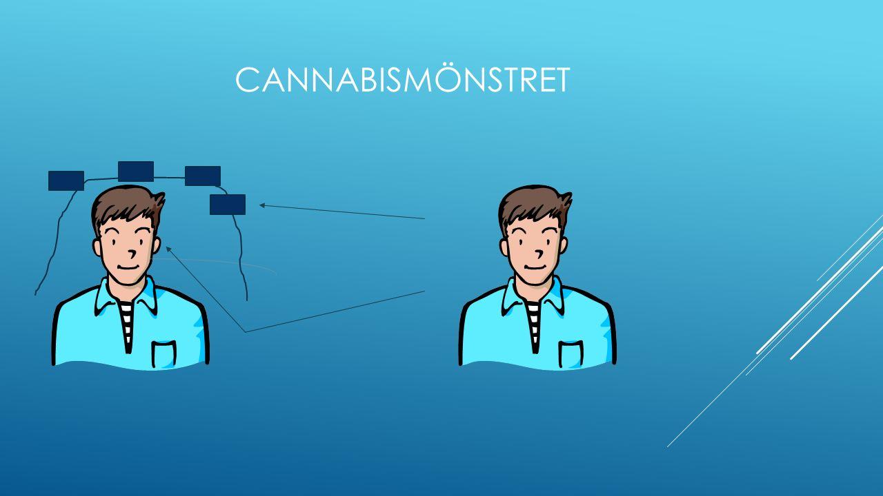 Från dag 13 till dag 21 har vi den psykologiska fasen Den börjar hos individen när cannabinoiderna inte längre dominerar känslolivet.