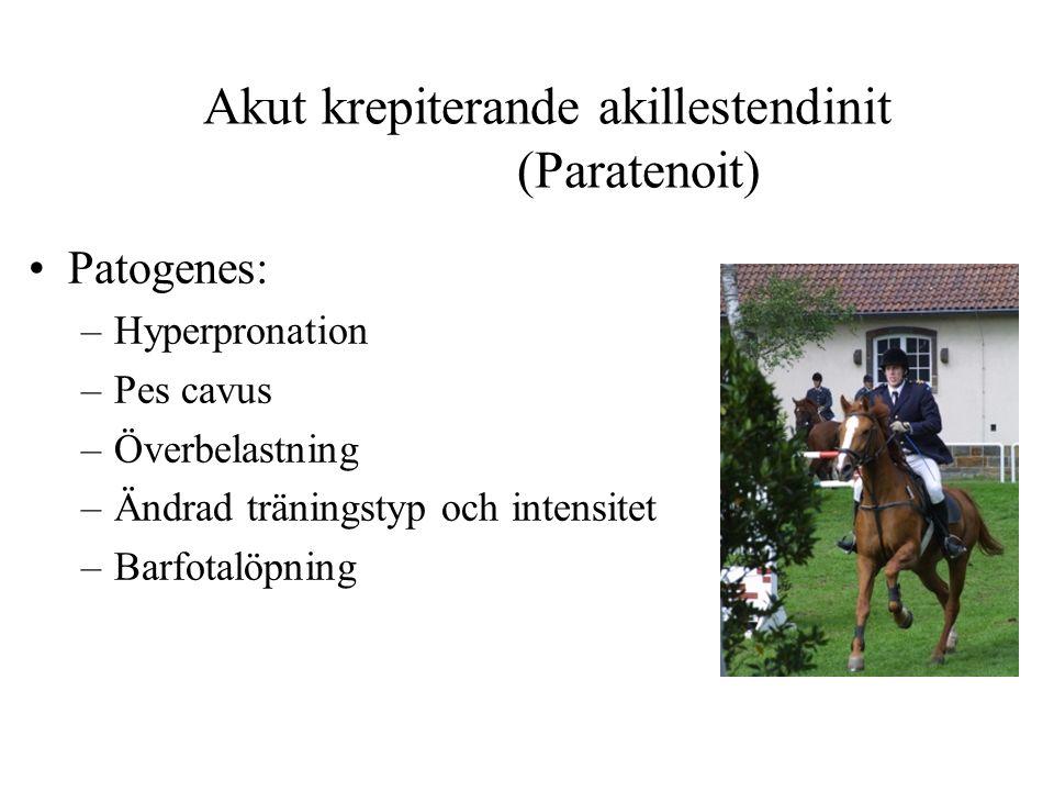 Akut krepiterande akillestendinit (Paratenoit) Patogenes: –Hyperpronation –Pes cavus –Överbelastning –Ändrad träningstyp och intensitet –Barfotalöpning