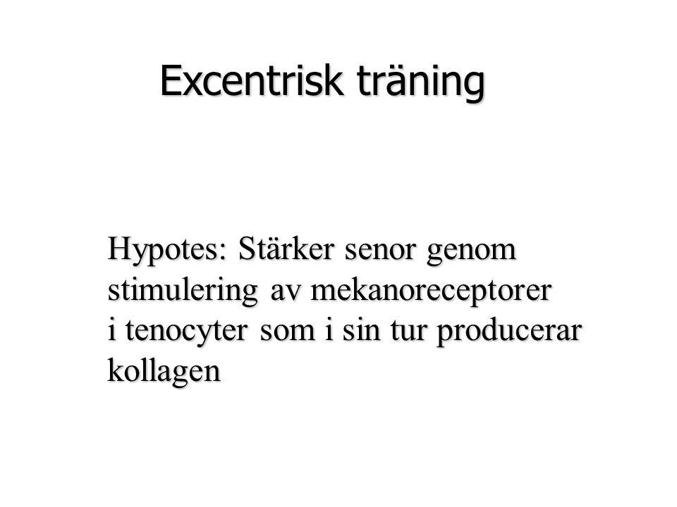 Hypotes: Stärker senor genom stimulering av mekanoreceptorer i tenocyter som i sin tur producerar kollagen Excentrisk träning