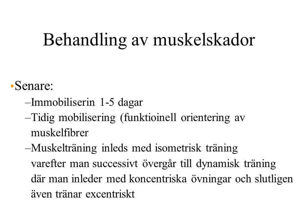 Behandling av muskelskador Senare: –Immobiliserin 1-5 dagar –Tidig mobilisering (funktioinell orientering av muskelfibrer –Muskelträning inleds med isometrisk träning varefter man successivt övergår till dynamisk träning där man inleder med koncentriska övningar och slutligen även tränar excentriskt