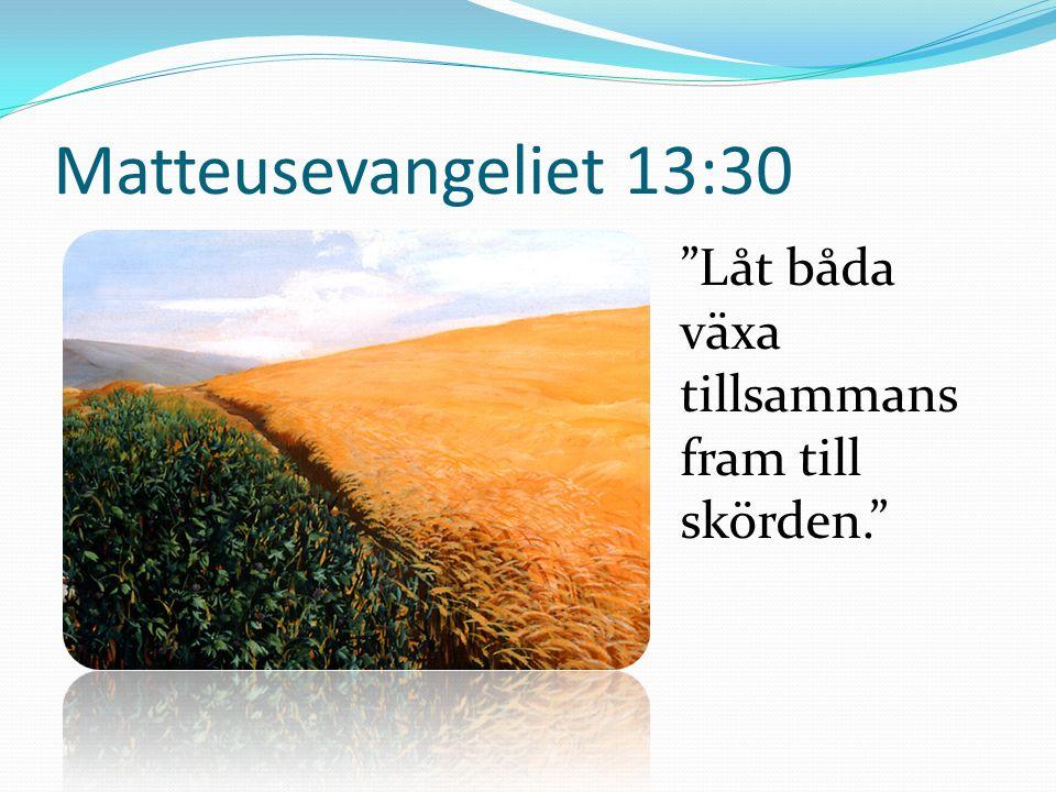 Matteusevangeliet 13:30 Låt båda växa tillsammans fram till skörden.