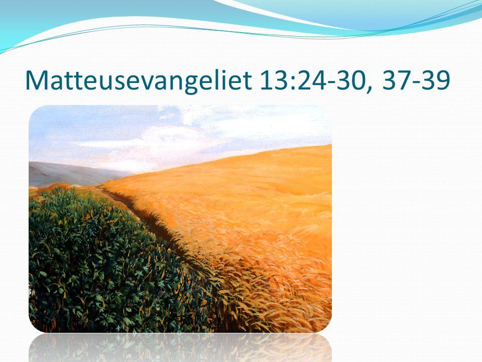 Matteusevangeliet 13:24-30, 37-39