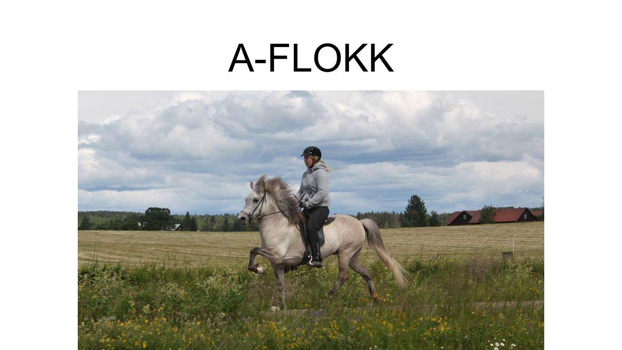 A-FLOKK