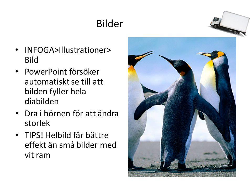 Bilder INFOGA>Illustrationer> Bild PowerPoint försöker automatiskt se till att bilden fyller hela diabilden Dra i hörnen för att ändra storlek TIPS.