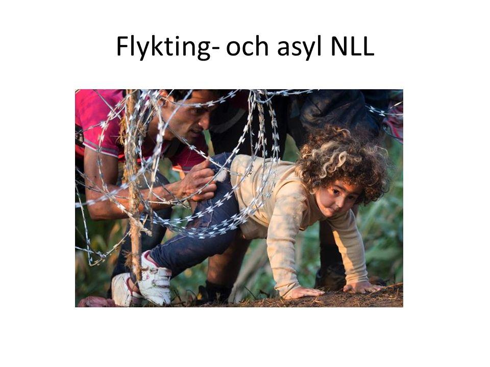 Flykting- och asyl NLL