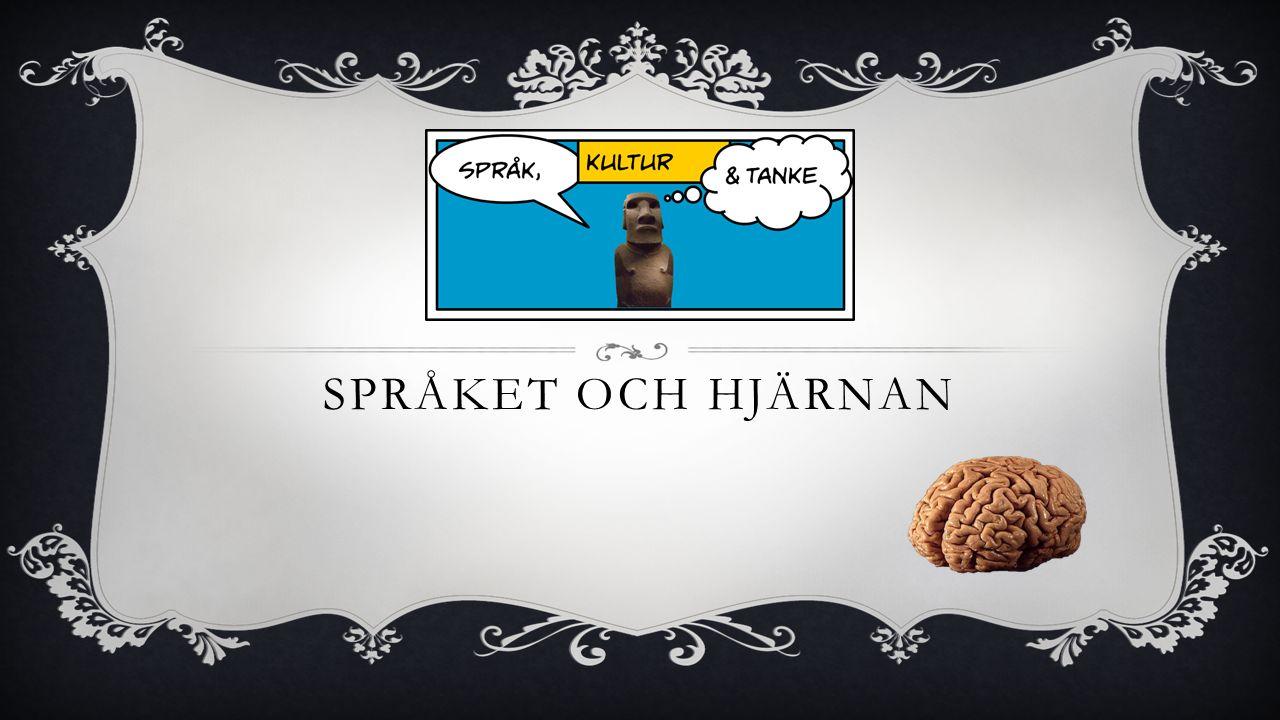 SPRÅKET OCH HJÄRNAN