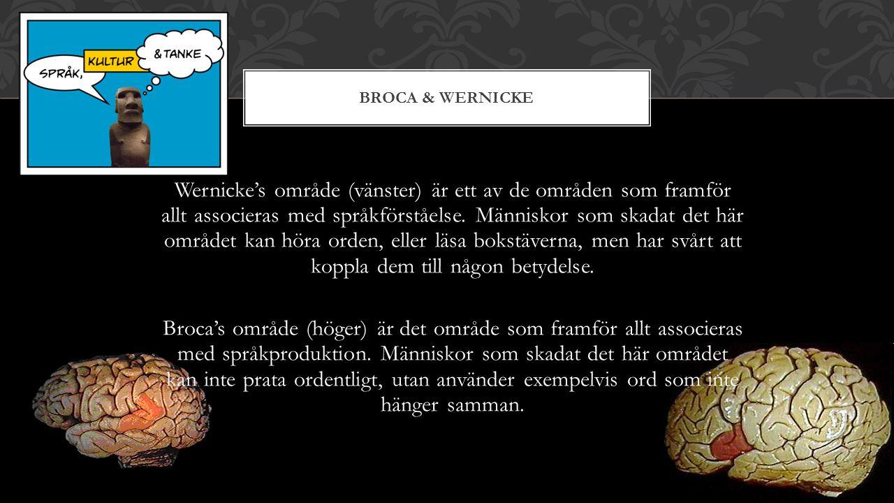 Wernicke's område (vänster) är ett av de områden som framför allt associeras med språkförståelse.
