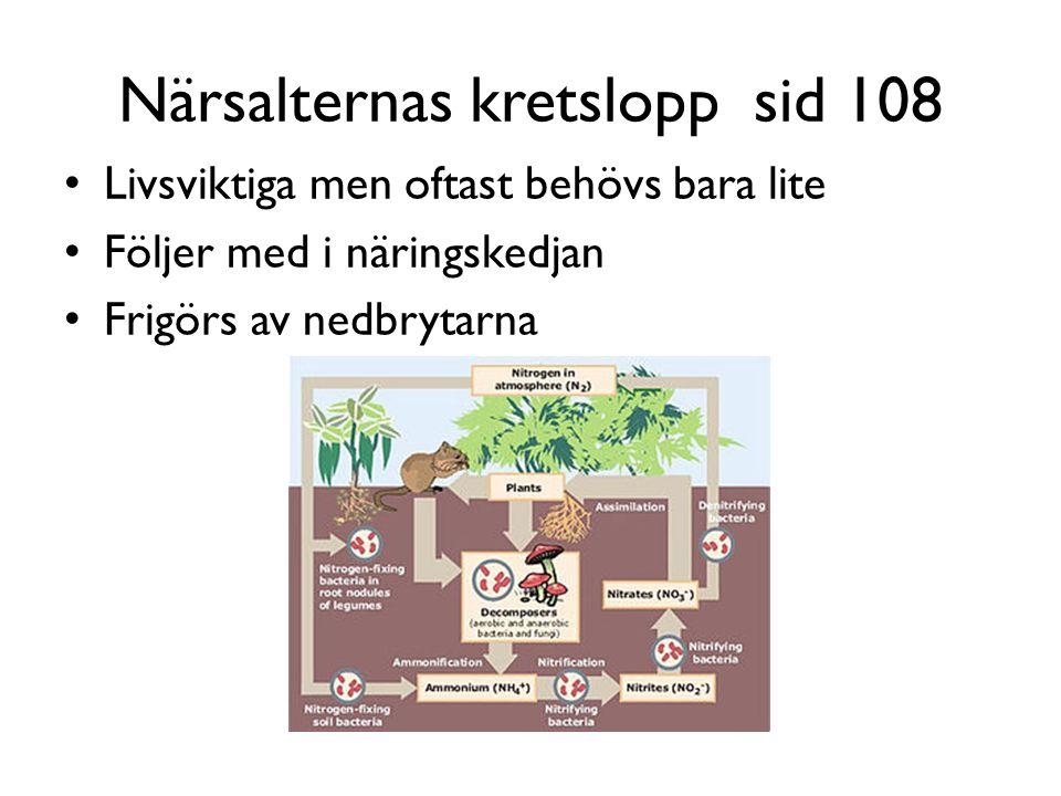 Närsalternas kretslopp sid 108 Livsviktiga men oftast behövs bara lite Följer med i näringskedjan Frigörs av nedbrytarna