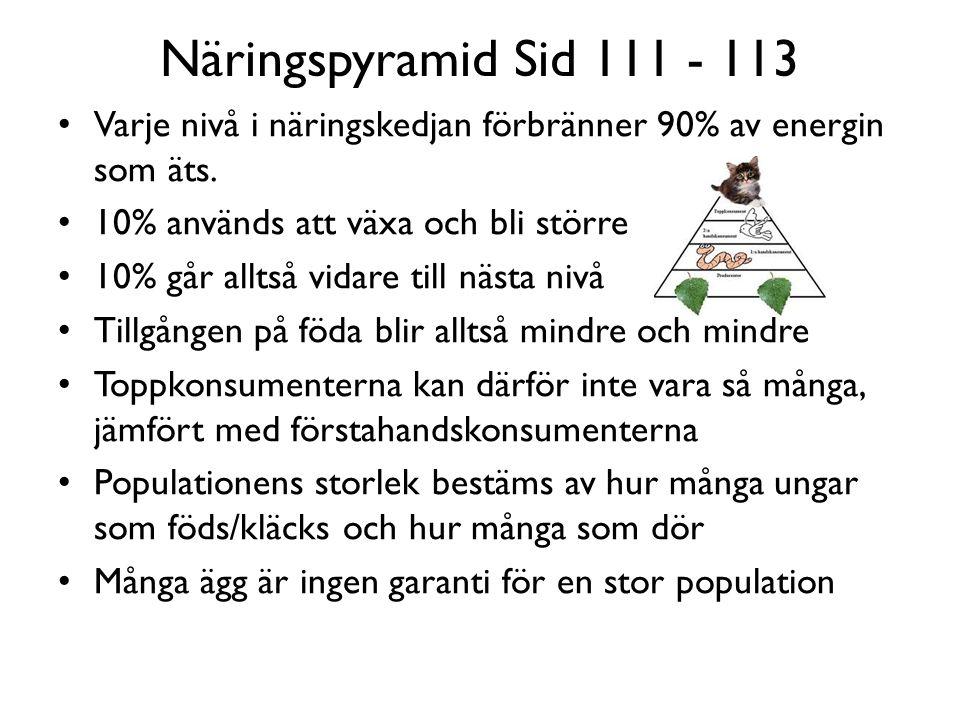 Näringspyramid Sid 111 - 113 Varje nivå i näringskedjan förbränner 90% av energin som äts.