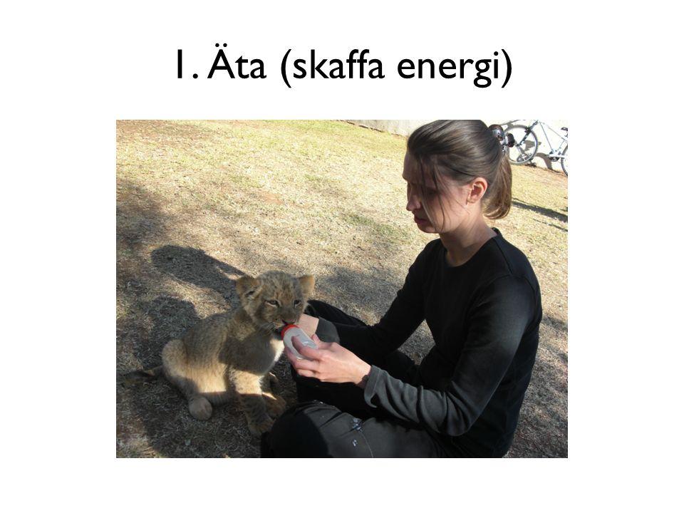 1. Äta (skaffa energi)