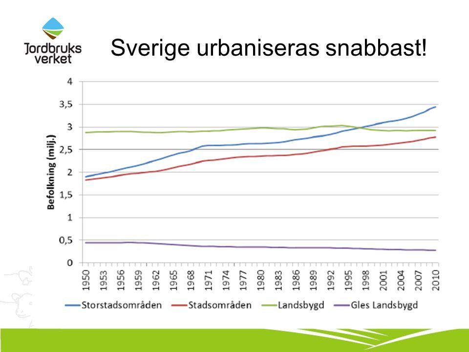 Sverige urbaniseras snabbast!