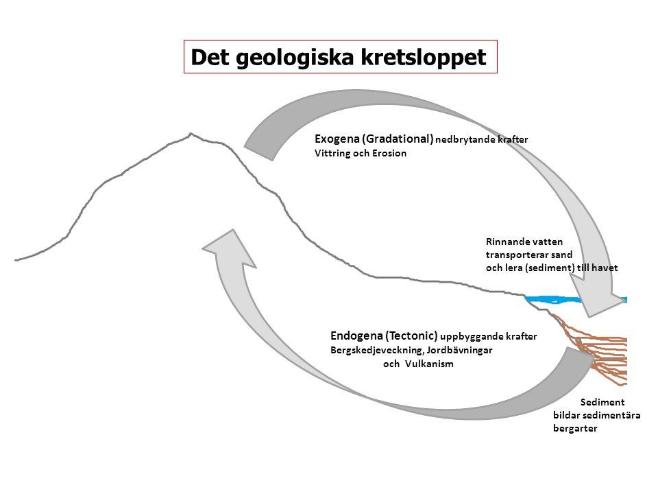 Endogena (Tectonic) uppbyggande krafter Bergskedjeveckning, Jordbävningar och Vulkanism Exogena (Gradational) nedbrytande krafter Vittring och Erosion Rinnande vatten transporterar sand och lera (sediment) till havet Sediment bildar sedimentära bergarter Det geologiska kretsloppet