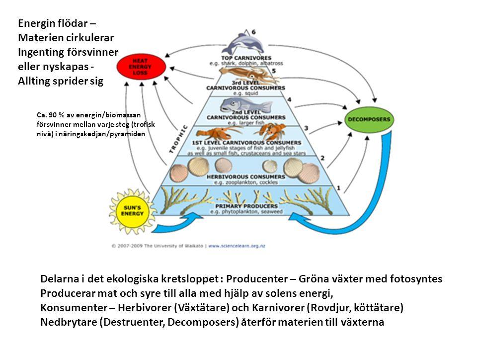 Delarna i det ekologiska kretsloppet : Producenter – Gröna växter med fotosyntes Producerar mat och syre till alla med hjälp av solens energi, Konsume