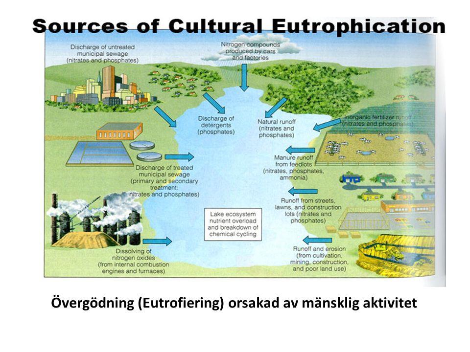 Övergödning (Eutrofiering) orsakad av mänsklig aktivitet