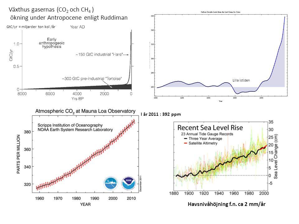 Växthus gasernas (CO 2 och CH 4 ) ökning under Antropocene enligt Ruddiman I år 2011 : 392 ppm Havsnivåhöjning f.n. ca 2 mm/år GtC/yr = miljarder ton