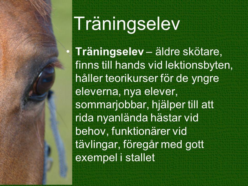 Träningselev Träningselev – äldre skötare, finns till hands vid lektionsbyten, håller teorikurser för de yngre eleverna, nya elever, sommarjobbar, hjälper till att rida nyanlända hästar vid behov, funktionärer vid tävlingar, föregår med gott exempel i stallet