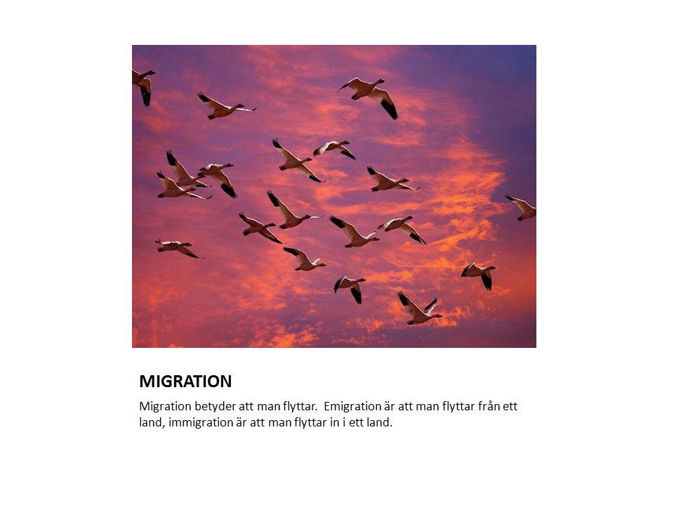 MIGRATION Migration betyder att man flyttar.