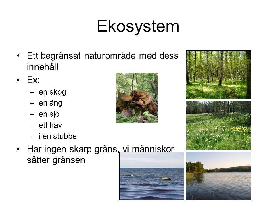 Ekosystem Ett begränsat naturområde med dess innehåll Ex: –en skog –en äng –en sjö –ett hav –i en stubbe Har ingen skarp gräns, vi människor sätter gränsen
