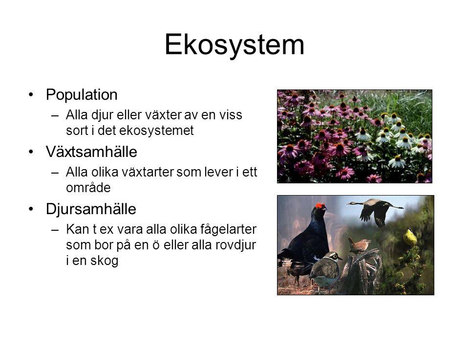 Ekosystem Population –Alla djur eller växter av en viss sort i det ekosystemet Växtsamhälle –Alla olika växtarter som lever i ett område Djursamhälle –Kan t ex vara alla olika fågelarter som bor på en ö eller alla rovdjur i en skog