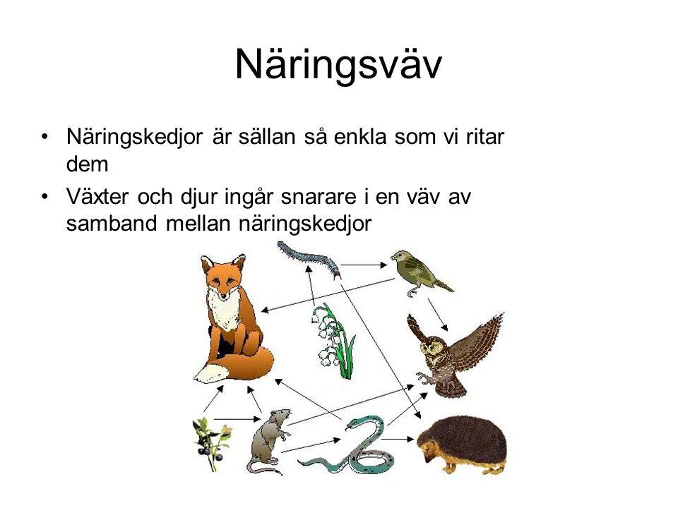 Näringsväv Näringskedjor är sällan så enkla som vi ritar dem Växter och djur ingår snarare i en väv av samband mellan näringskedjor