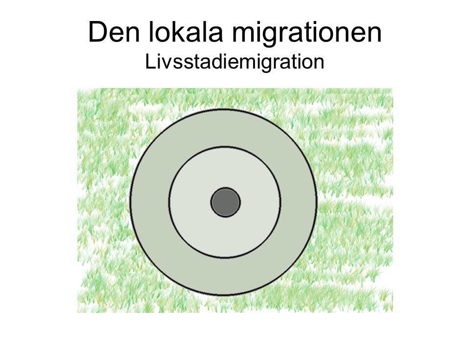 Den lokala migrationen Livsstadiemigration