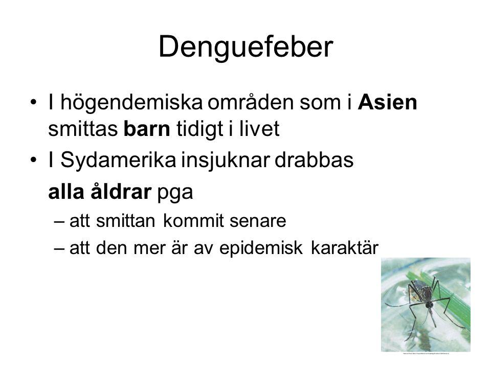 Denguefeber I högendemiska områden som i Asien smittas barn tidigt i livet I Sydamerika insjuknar drabbas alla åldrar pga –att smittan kommit senare –att den mer är av epidemisk karaktär