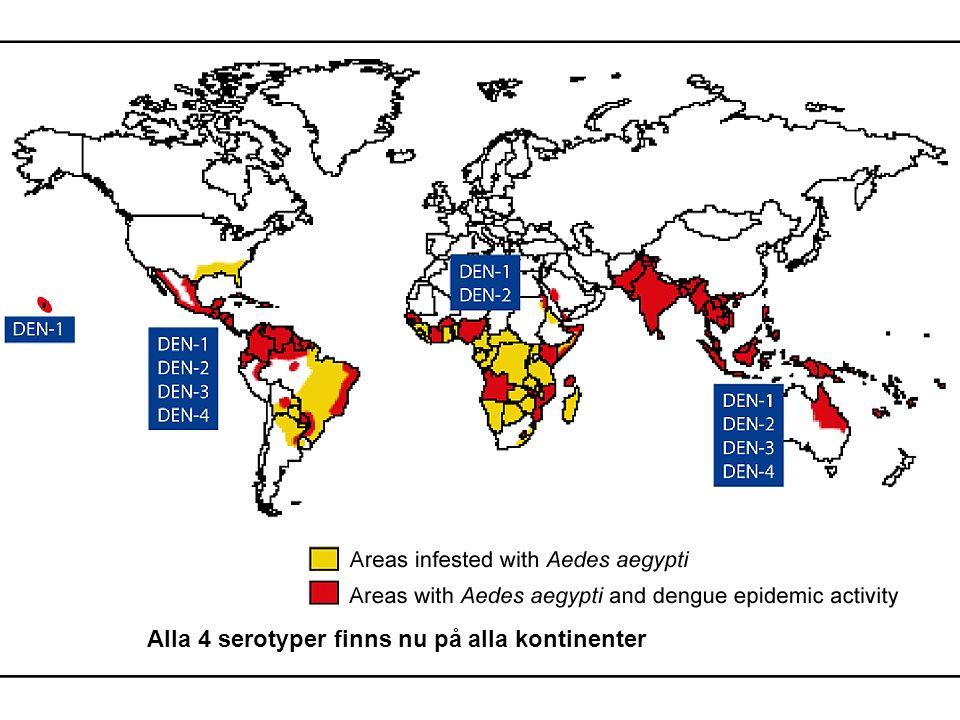 Alla 4 serotyper finns nu på alla kontinenter