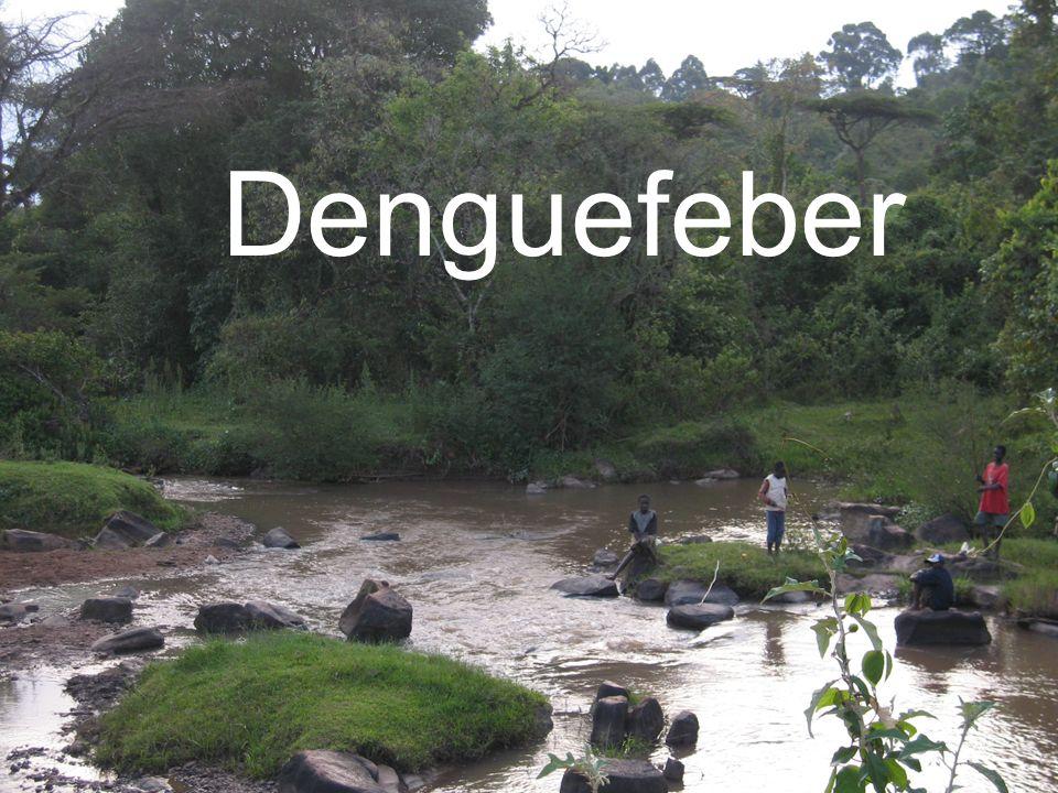 Denguefeber EJ 080407