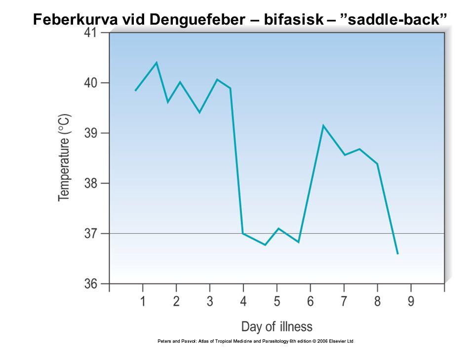 Feberkurva vid Denguefeber – bifasisk – saddle-back