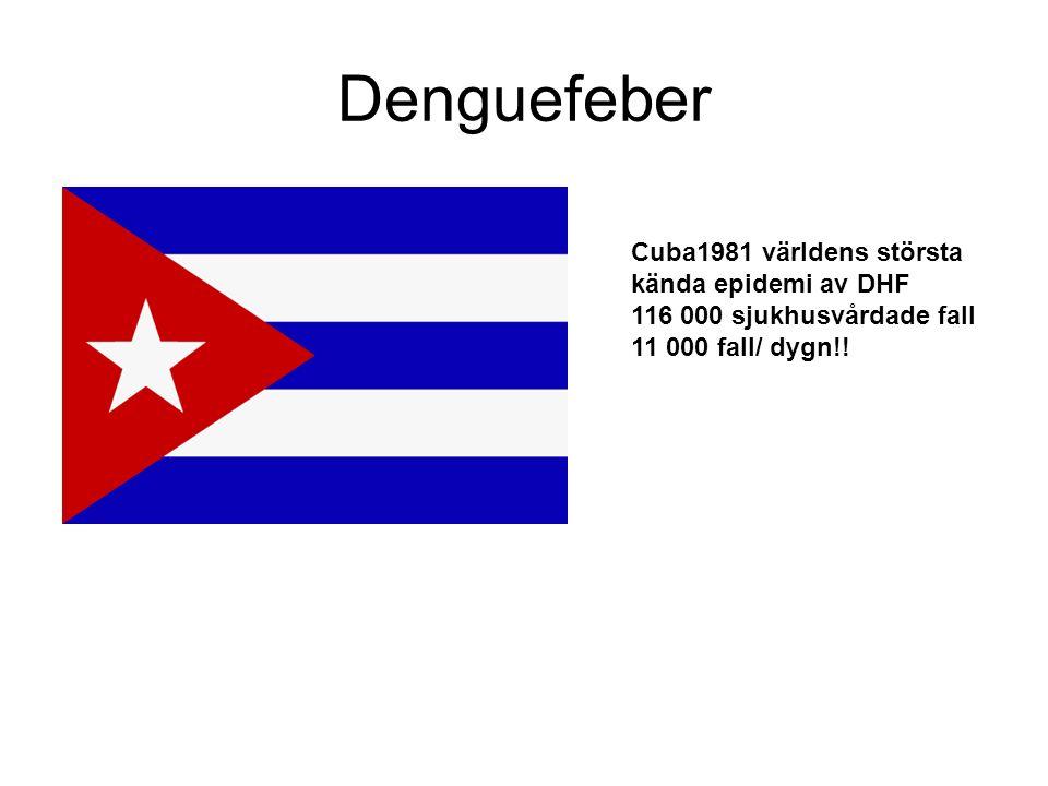 Denguefeber Cuba1981 världens största kända epidemi av DHF 116 000 sjukhusvårdade fall 11 000 fall/ dygn!!