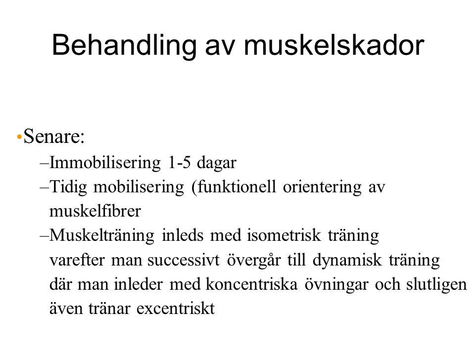 Behandling av muskelskador Senare: –Immobilisering 1-5 dagar –Tidig mobilisering (funktionell orientering av muskelfibrer –Muskelträning inleds med isometrisk träning varefter man successivt övergår till dynamisk träning där man inleder med koncentriska övningar och slutligen även tränar excentriskt