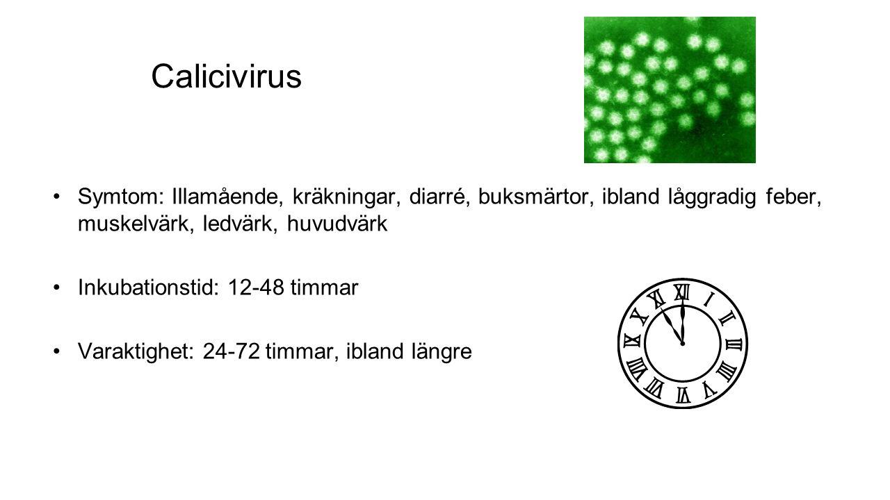 Calicivirus Symtom: Illamående, kräkningar, diarré, buksmärtor, ibland låggradig feber, muskelvärk, ledvärk, huvudvärk Inkubationstid: 12-48 timmar Varaktighet: 24-72 timmar, ibland längre