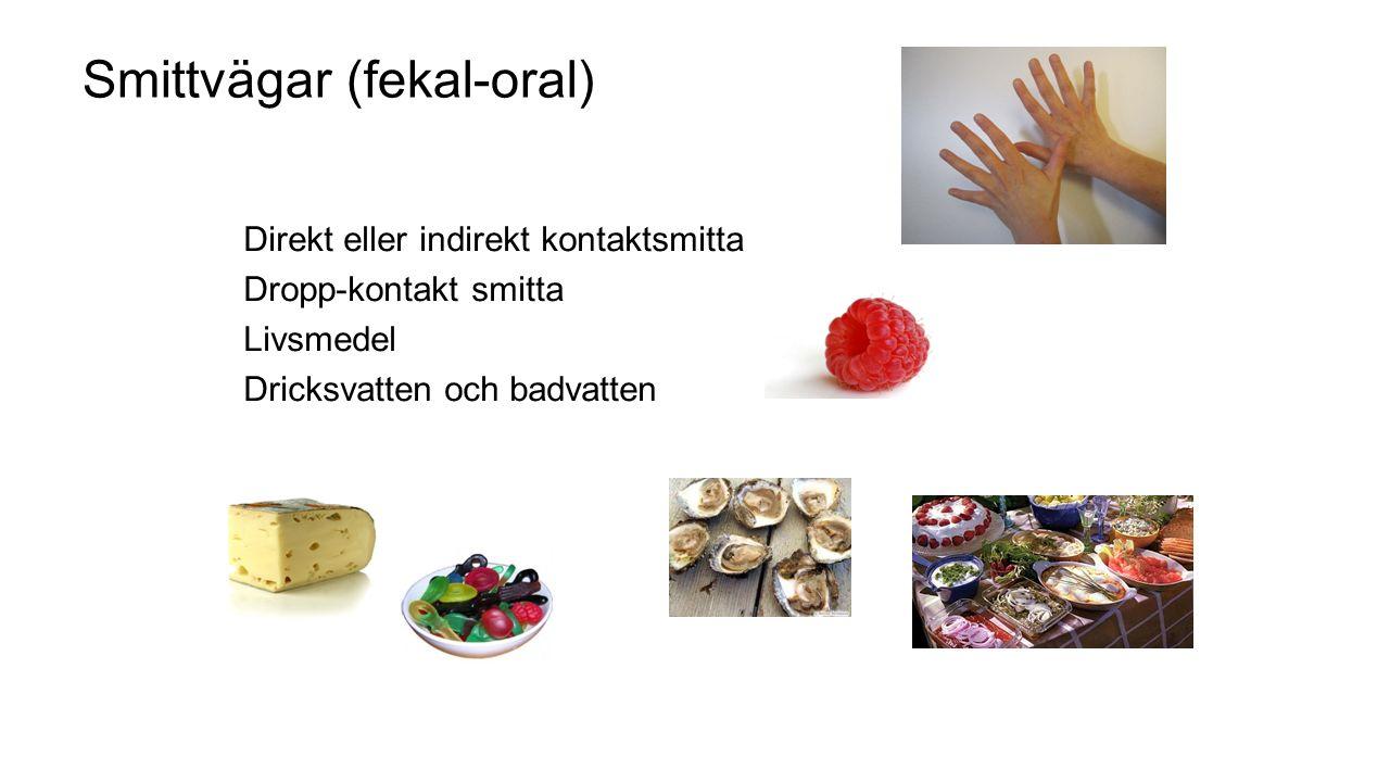 Smittvägar (fekal-oral) Direkt eller indirekt kontaktsmitta Dropp-kontakt smitta Livsmedel Dricksvatten och badvatten