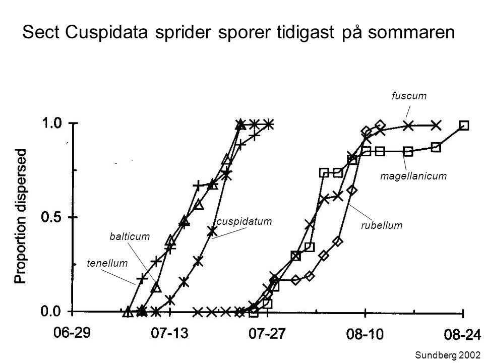 tenellum cuspidatum balticum magellanicum rubellum fuscum Sect Cuspidata sprider sporer tidigast på sommaren Sundberg 2002