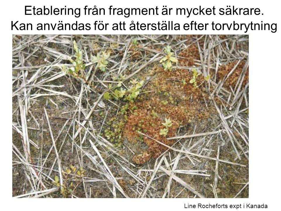 Line Rocheforts expt i Kanada Etablering från fragment är mycket säkrare.
