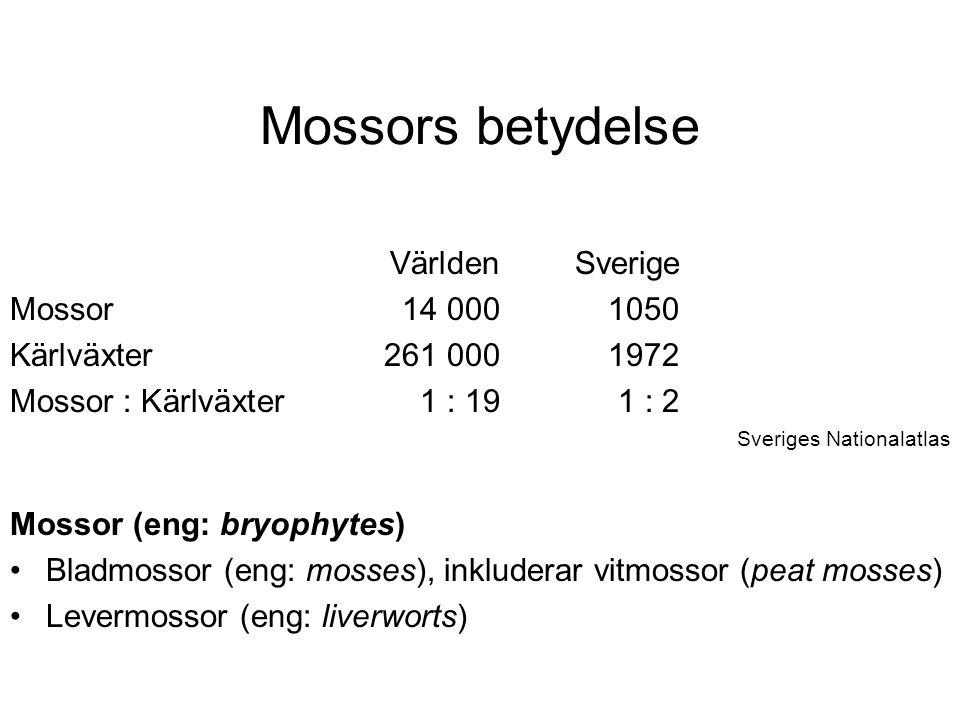 Mossors betydelse VärldenSverige Mossor14 0001050 Kärlväxter261 0001972 Mossor : Kärlväxter1 : 191 : 2 Sveriges Nationalatlas Mossor (eng: bryophytes) Bladmossor (eng: mosses), inkluderar vitmossor (peat mosses) Levermossor (eng: liverworts)