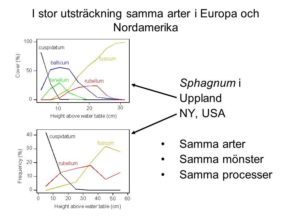 Sphagnum i Uppland NY, USA Samma arter Samma mönster Samma processer I stor utsträckning samma arter i Europa och Nordamerika