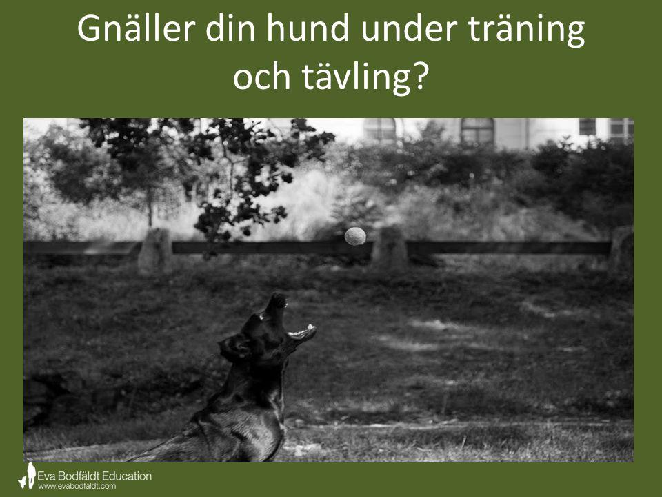 Gnäller din hund under träning och tävling