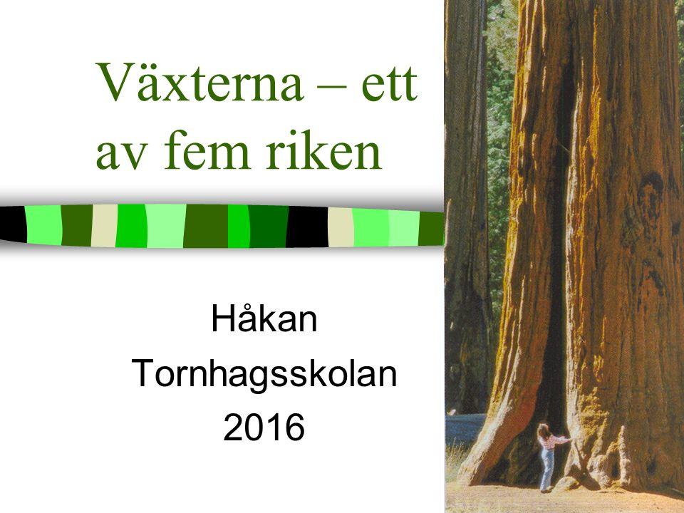 Växterna – ett av fem riken Håkan Tornhagsskolan 2016