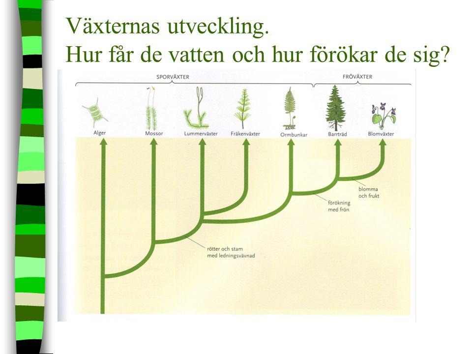 Växternas 7 grupper. Kändaste